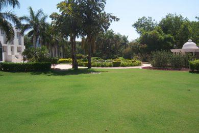Lush Lawn at Sihor Plant